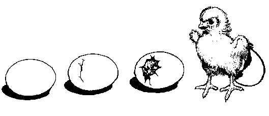 La Schiusa Delle Uova